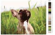 Malování podle čísel - Francouzský Buldoček v trávě - bez rámu a vypnutí