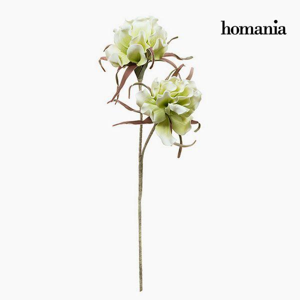 Květina Pěna Bílý Zelená by Homania