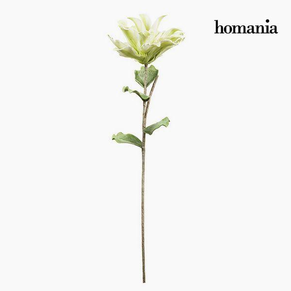 Kwiat Piana Kolor zielony by Homania