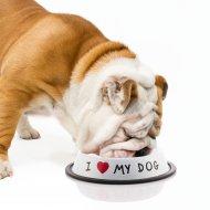 Miska na žrádlo pro psy - I ♡ My Dog - bílá
