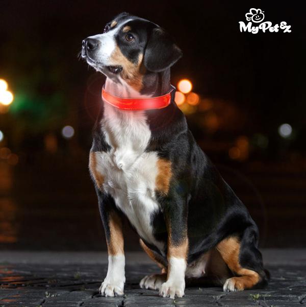 Obroża dla Psa z LED My Pet EZ