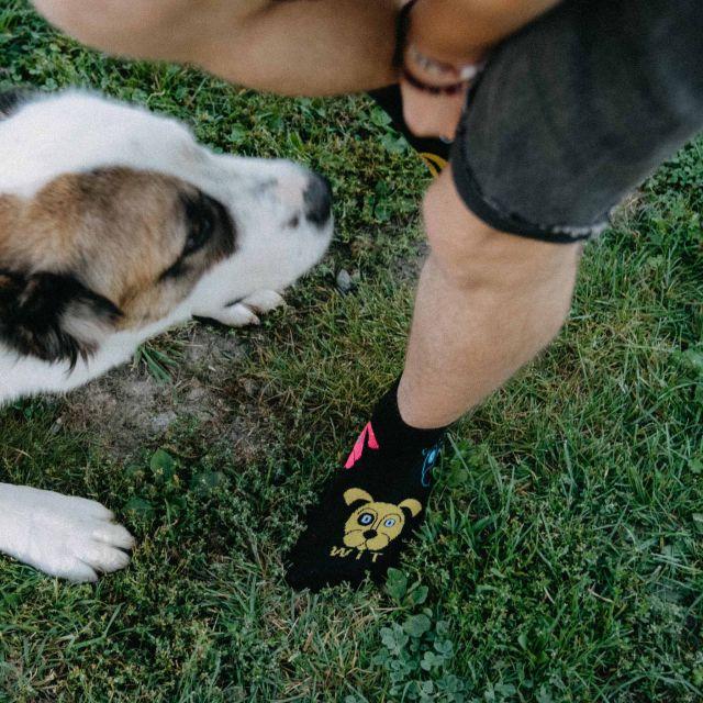 Skarpetki - Pies - czarny - niskie