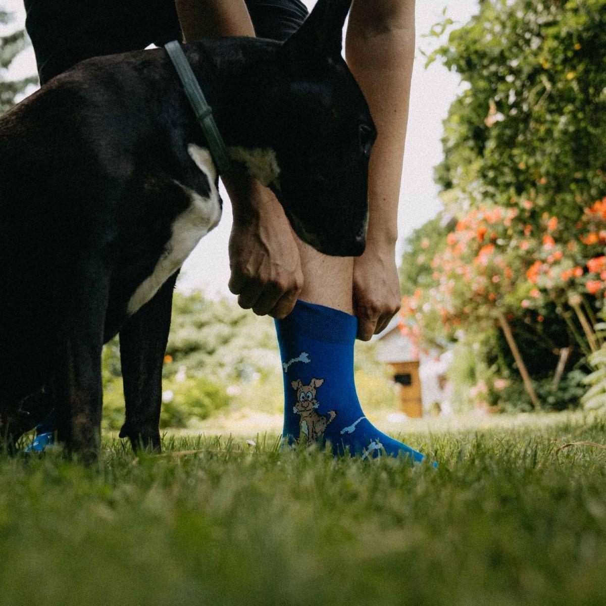 Șosete - Câine p3