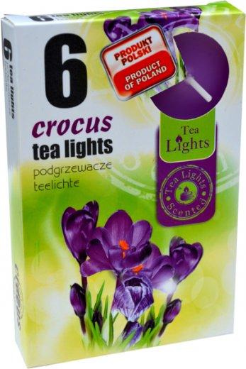Čajové svíčky 6 kusů –  Krokus