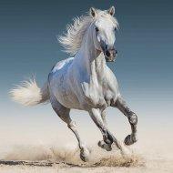 Povlak na polštářek White horse micro 40/40
