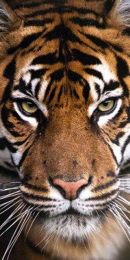 Osuška Tygr 70/140